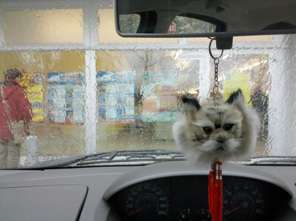 Cat in the rain